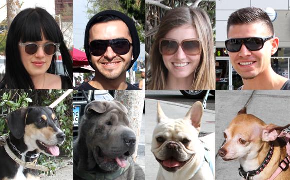StreetWalker Dogs