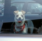WeHo to Launch Campaign about Danger of Leaving Kids and Pets in Cars