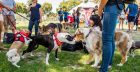 'Pawsapalooza' Dog Fair on Sunday at West Hollywood Park