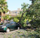 Tree Crash Closes West Knoll Drive