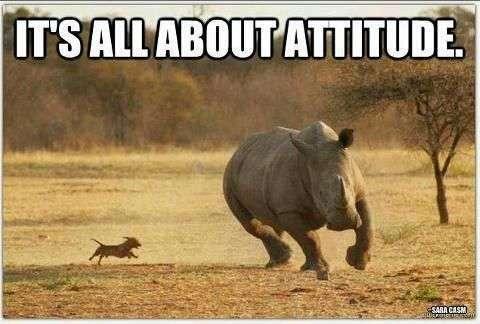 Little Dog Big Attitude