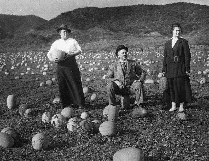 People never tired of holding or sitting on their casabas in a field at the corner of Sunset and Harper in 1918. (Photo courtesy of Los Angeles Public Library Photo Collection