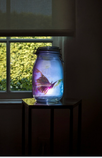 """Digital Taxidermy Series - Butterfly of Dreams,"" 2016. 8"" x 4"" glass jam-jar, video/sculpture Installation. mini video projector, USB memory stick. By Carl Hopgood (Photo by William Callan)."